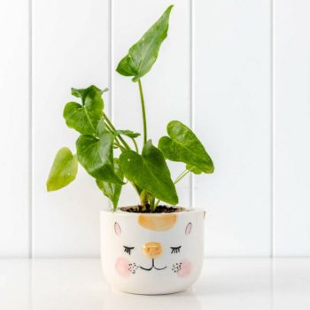 Cheeky Cat Pot Planter Art and Prints