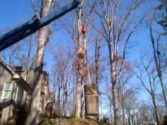 Crane Removal (43)