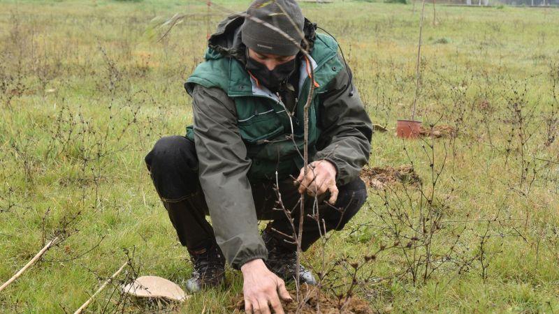 In Toscana piantati 800 nuovi alberi