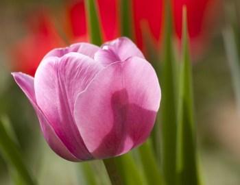 Der Frühling lockt