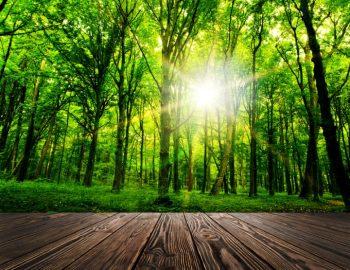 Geschützt: Ein Stück Natur im Kinderzimmer – So bringt ihr Wald & Wiese ganz einfach ins Kinderzimmer
