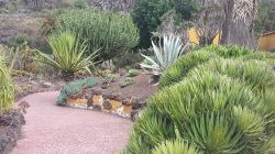 #giardino #botanico #Grancanaria #canario #agave