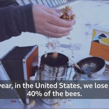 How office workers can help to save honeybees