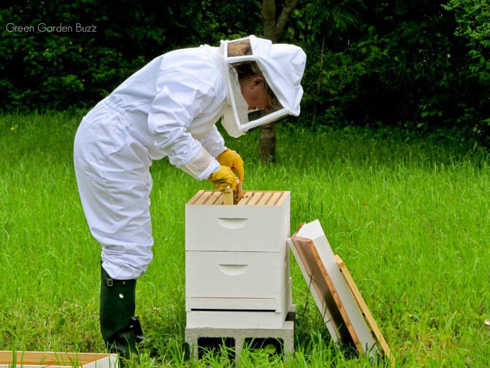 beekeeping and gardening
