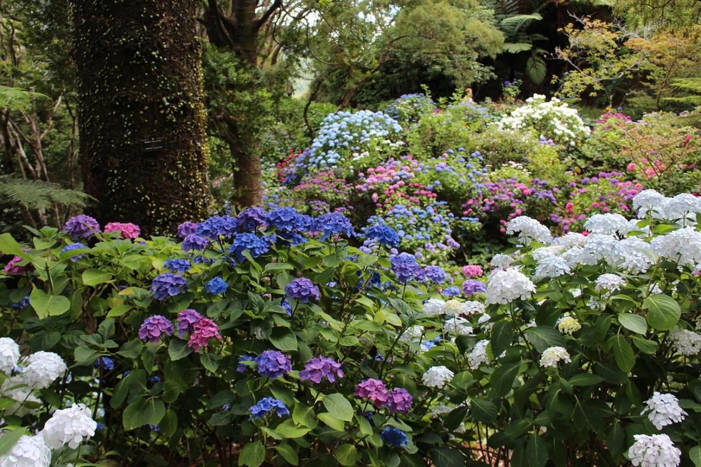 Do Hydrangeas Feed The Bees Green Garden Buzz