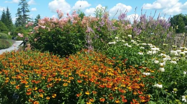 pollinator-friendly flowers, organic gardening tips
