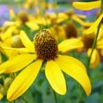 fall bee flowers