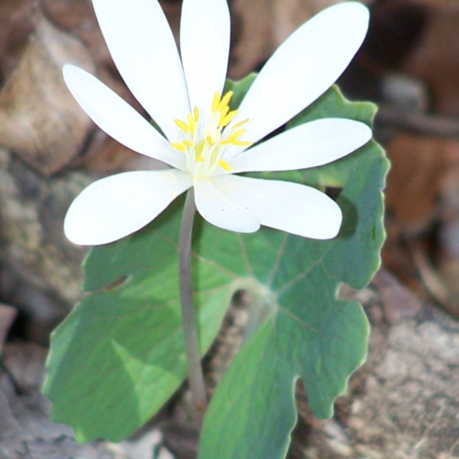 about-pg-nxt-to-training-bloodroot-04_17_13-085