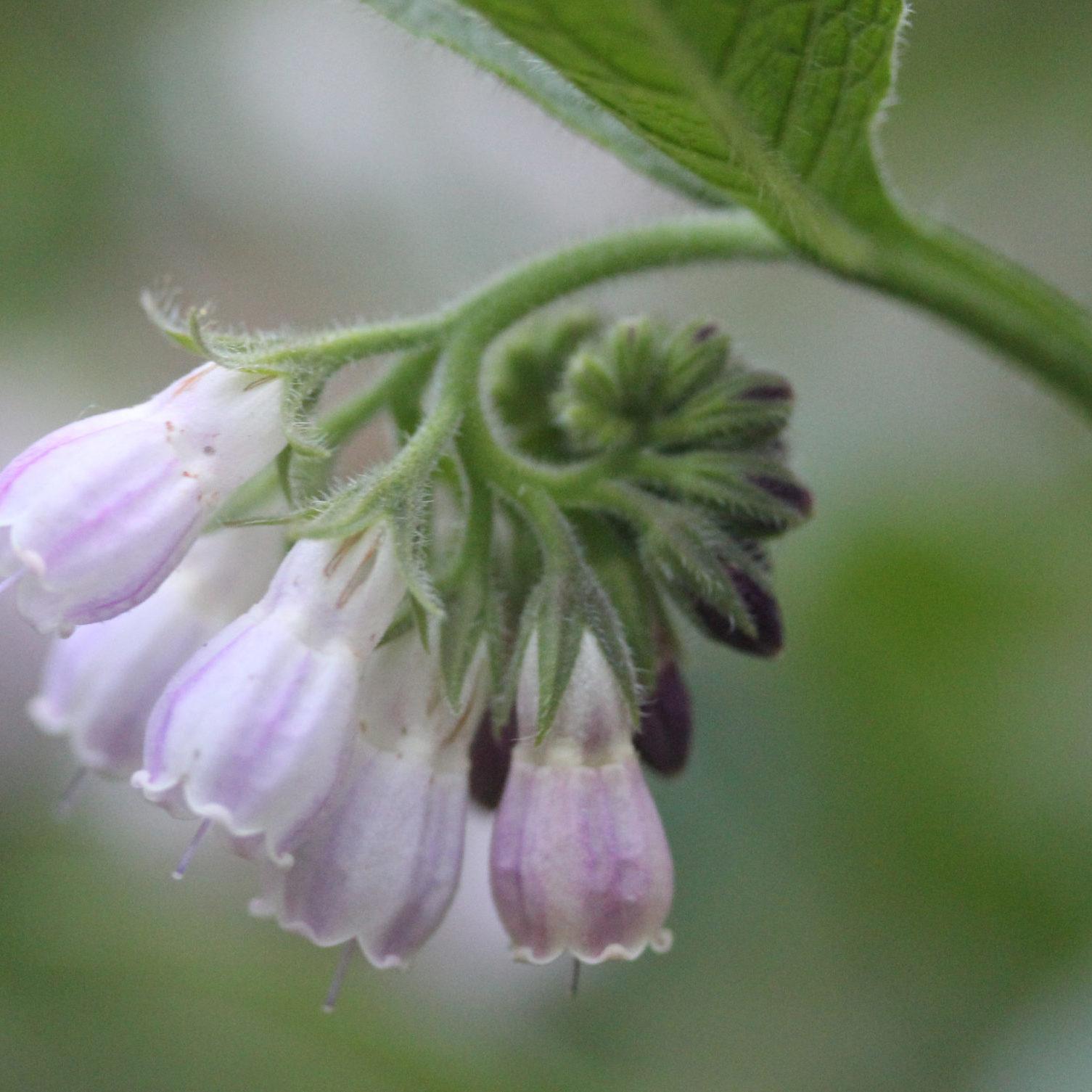 sacred-heart-of-herbalism-page-n3