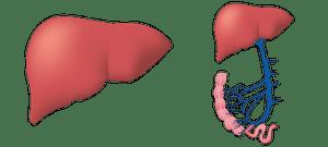 Пречистване на черен дроб 2