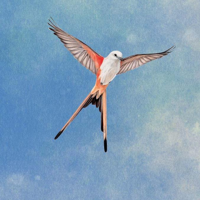"""Résultat de recherche d'images pour """"wingspan art"""""""
