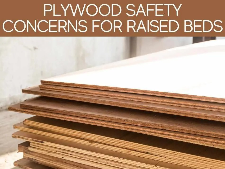 Is Plywood Safe For Raised Beds Greenhouse Today