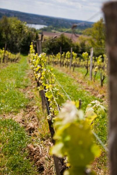 La Cabane dans les Vignes. © Elodie Rothan