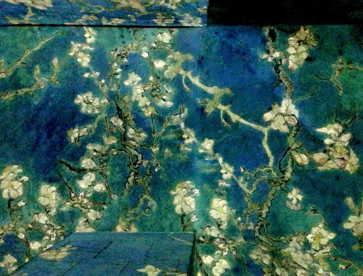 """Amandiers en fleurs, exposition """"Van Gogh, La nuit étoilée"""" aux Carrières de Lumières."""