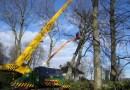 Onderhoud bomen snoeien of kappen