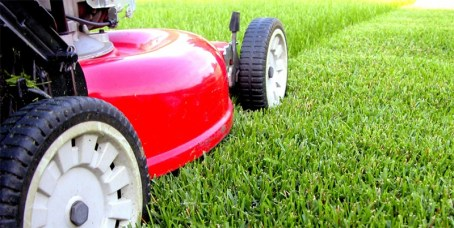 grass_cutting