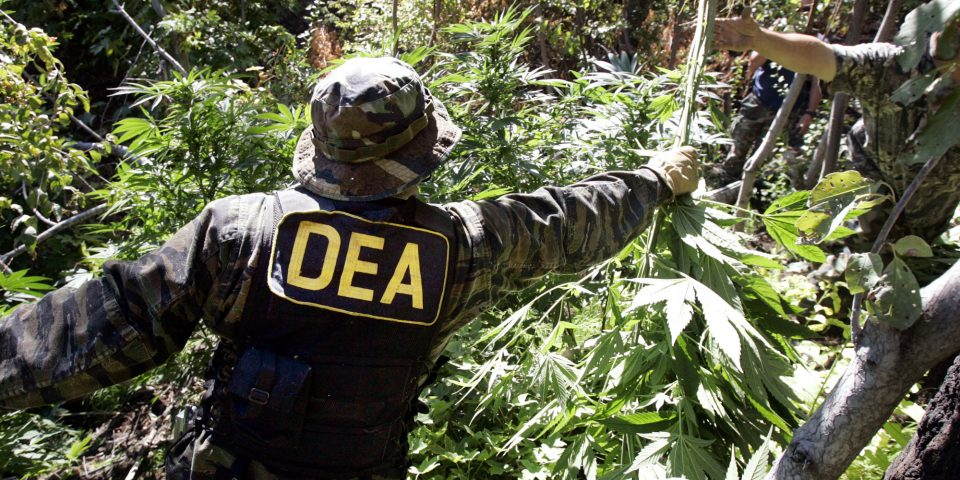 dea-medical-marijuana.jpg?fit=1200%2C600&ssl=1
