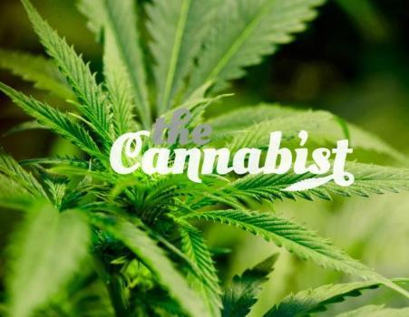 cannabist.jpg?fit=451%2C350&ssl=1