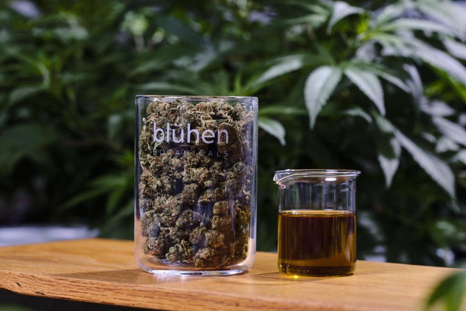 Blühen-hemp-flower-and-extracts.jpg?fit=1200%2C801&ssl=1