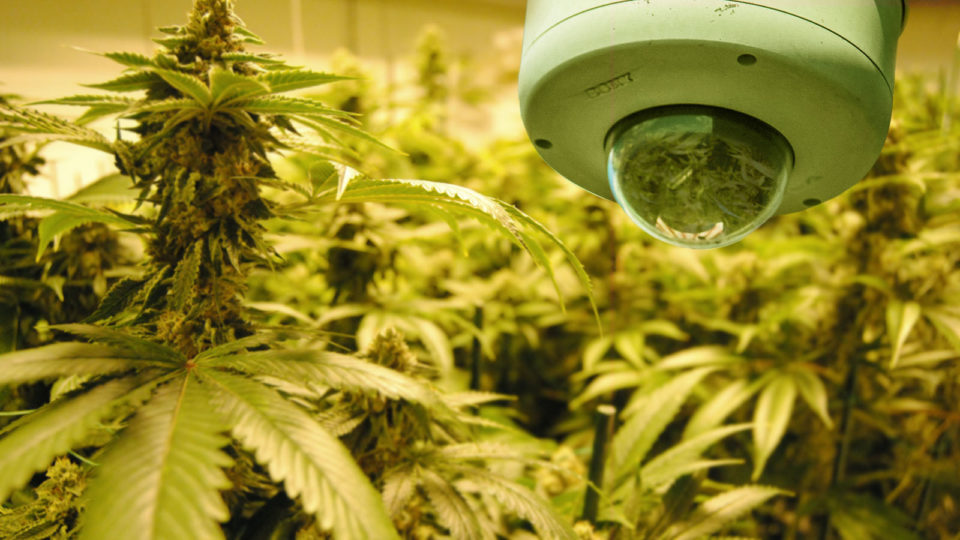 cannabis-security.jpg?fit=1200%2C675&ssl=1