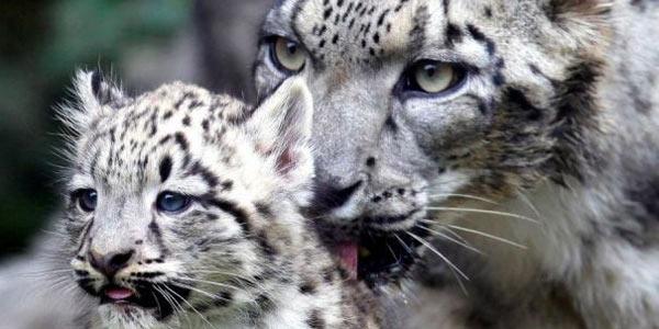 leopardo nevi 3