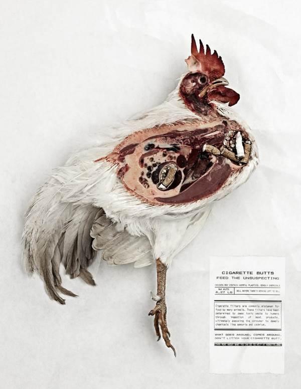 mozziconi sigaretta polli