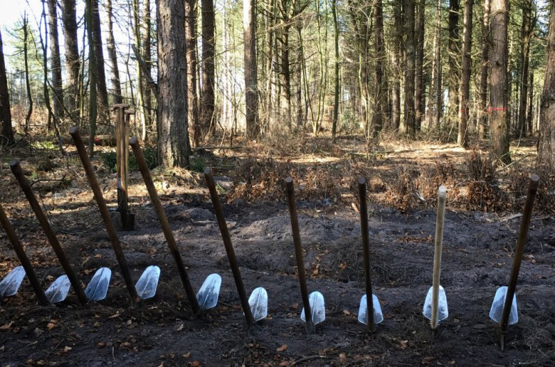 Bergwaldprojekt Amrum - Spades in the Forest | GreenMe Berlin on the road