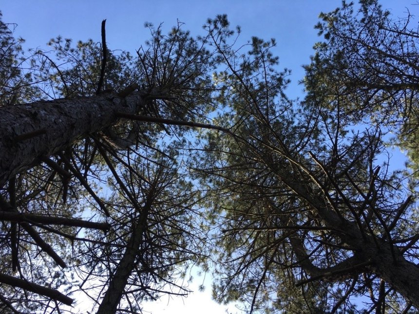 Bergwaldprojekt Amrum - Trees With Clouds | GreenMe Berlin on the road