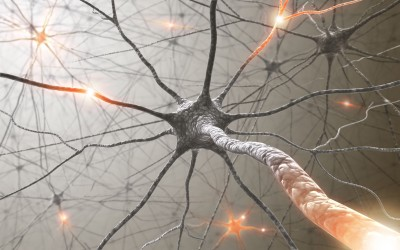 nerve cell regeneration