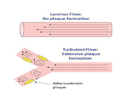 Laminar Flow Blood Pressure