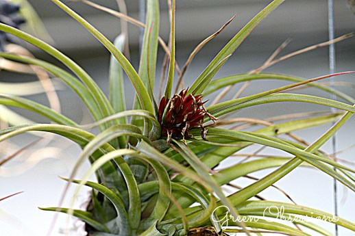 airplant 5