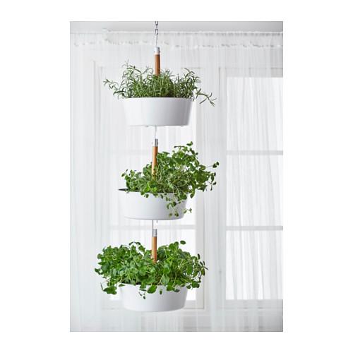 BITTERGURKA planter
