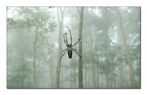 Arachnography: A photo essay from Dandeli