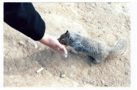 This little California Ground Squirrel ambled up and went nuts all over my palm, nibbling the (unsalted) nuts I offered it. Usually, I don't feed wild animals but something childish inside me caved.