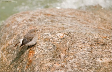 A female blends in with the rock it sits on