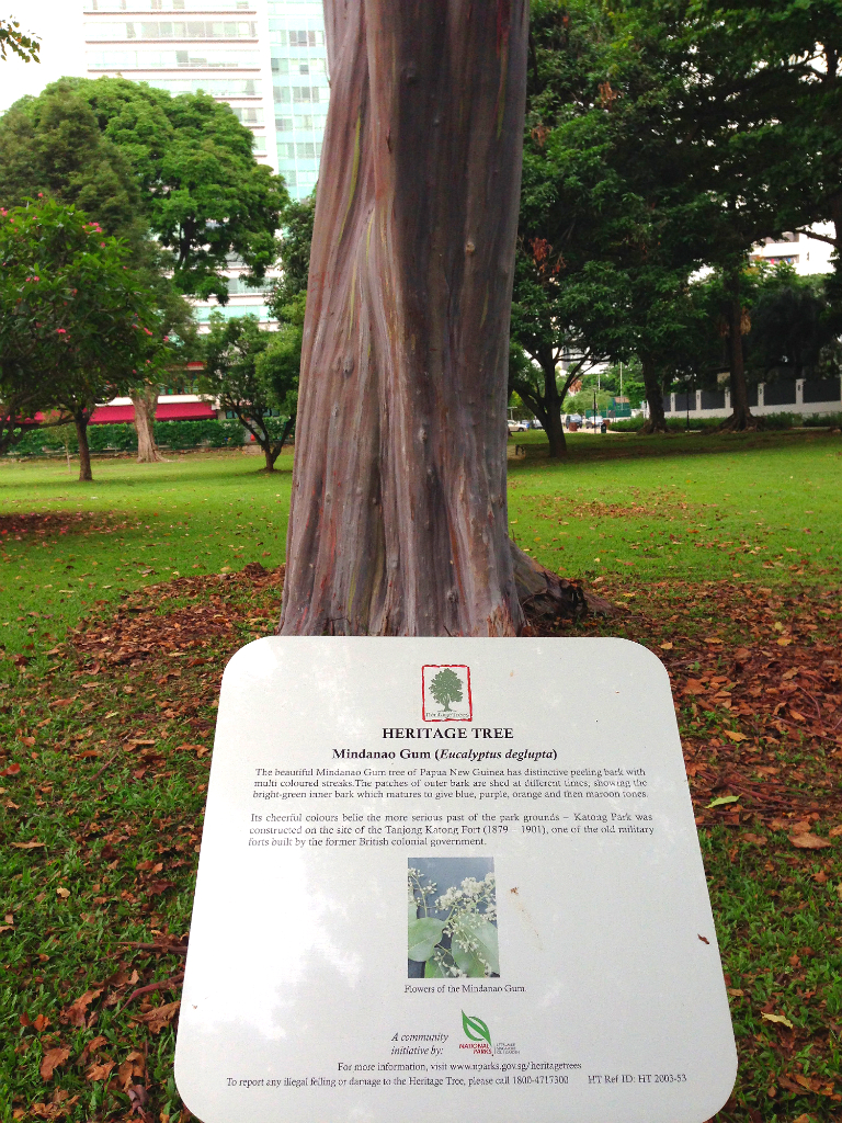 trees archives the green ogre the mindanao gum tree in katong park singapore