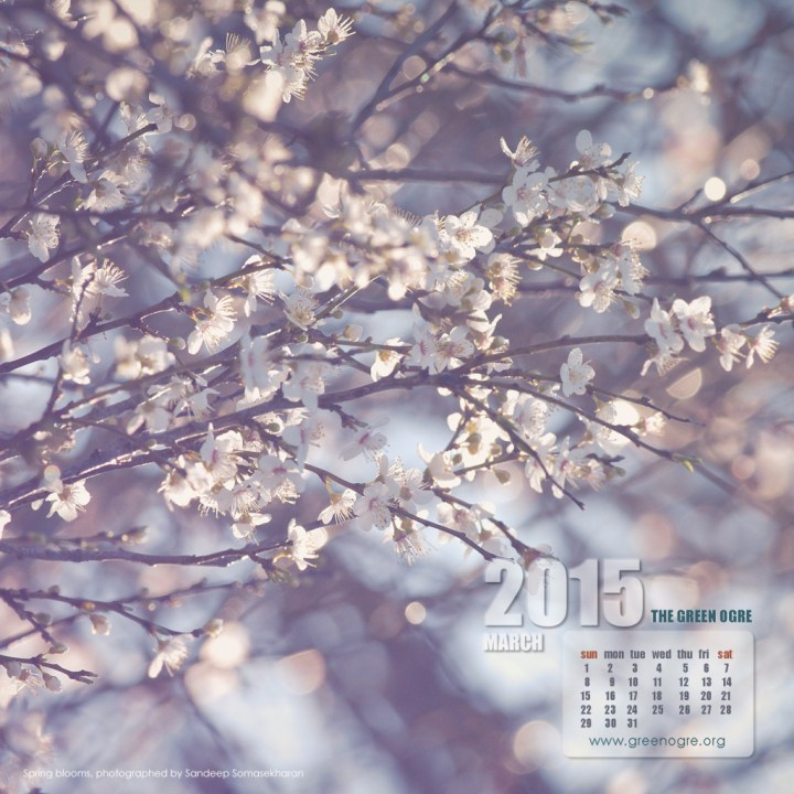 Download Spring for your iPad screen