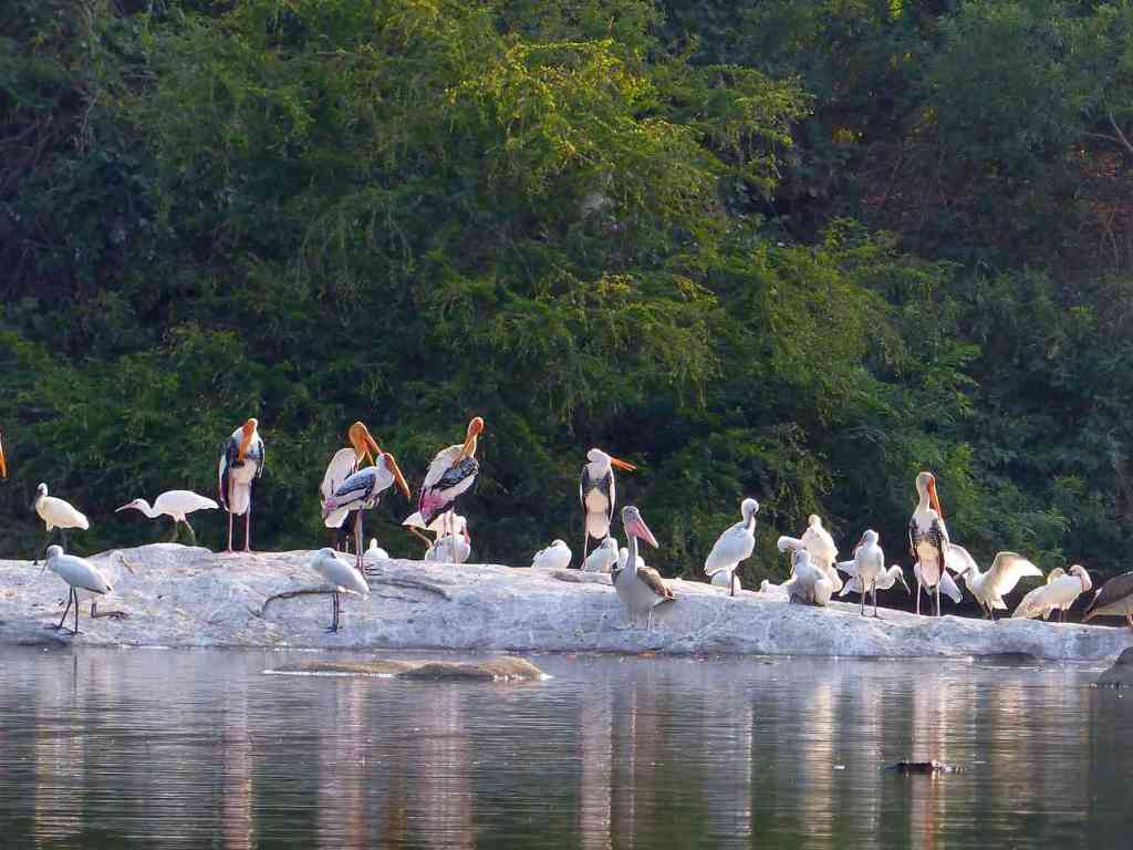 Ranganathittu – revisiting an old birding haunt