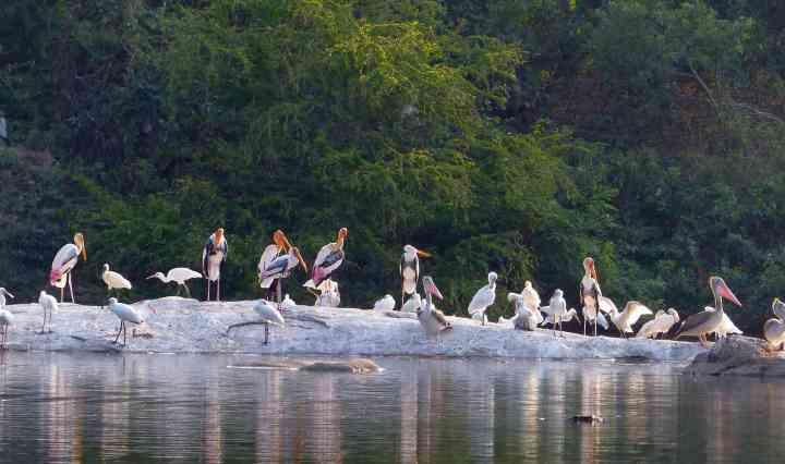 Ranganathittu - Group Photo
