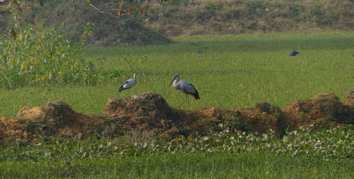 Kasavanahalli Lake 2018 Winter Birding