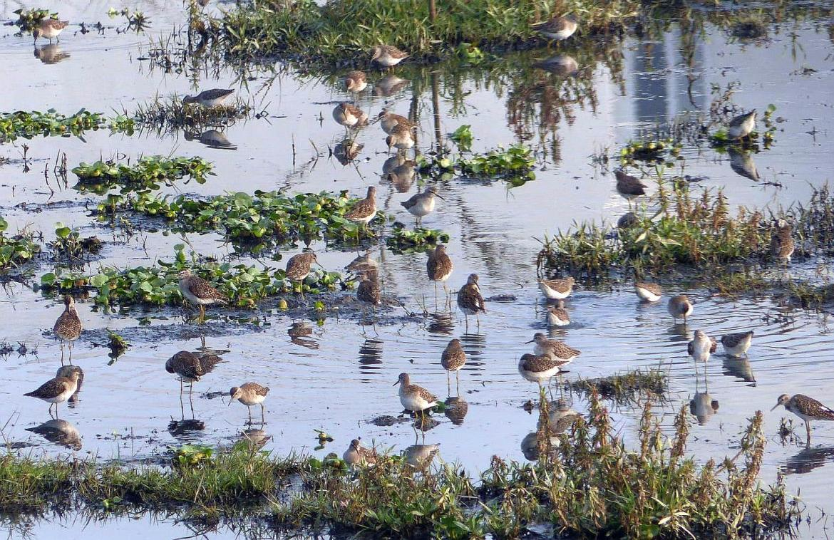 Kasavanahalli Lake Winter 2018 Birding