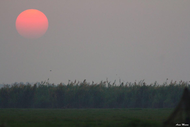 Astounding sunsets at Mangalajodi