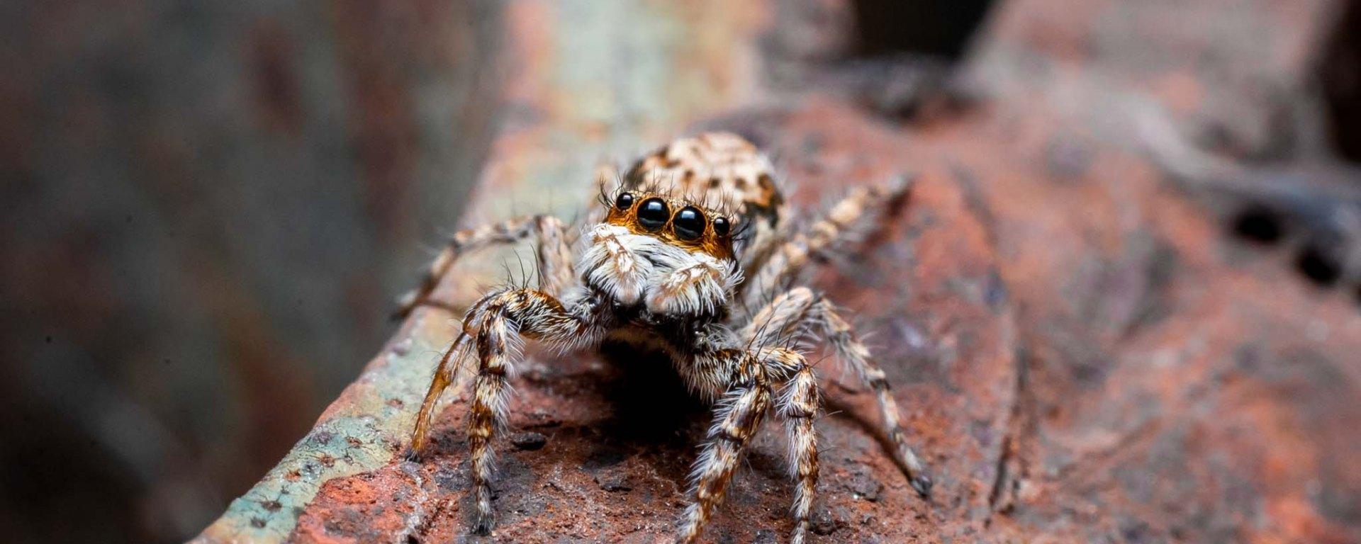 Macro photography Spiders Arachnids Bangalore