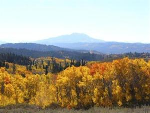 To match feature USA-FORESTS/ASPEN