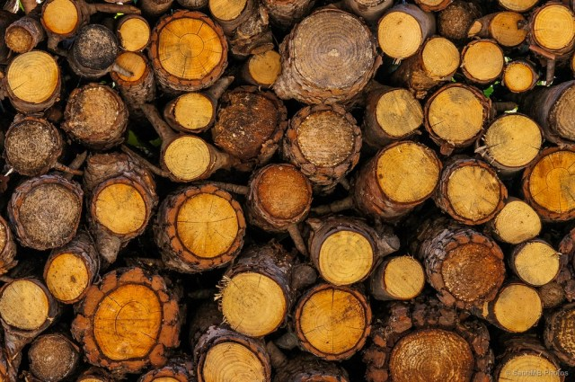 Wood, the Stone Age Answer to Our 21st Century Carbon Dioxide Problem?