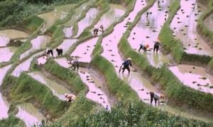 Ancient Farming Methods