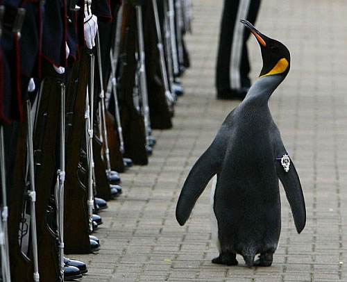 Military Tattoo, the annual military music festival, when the penguin