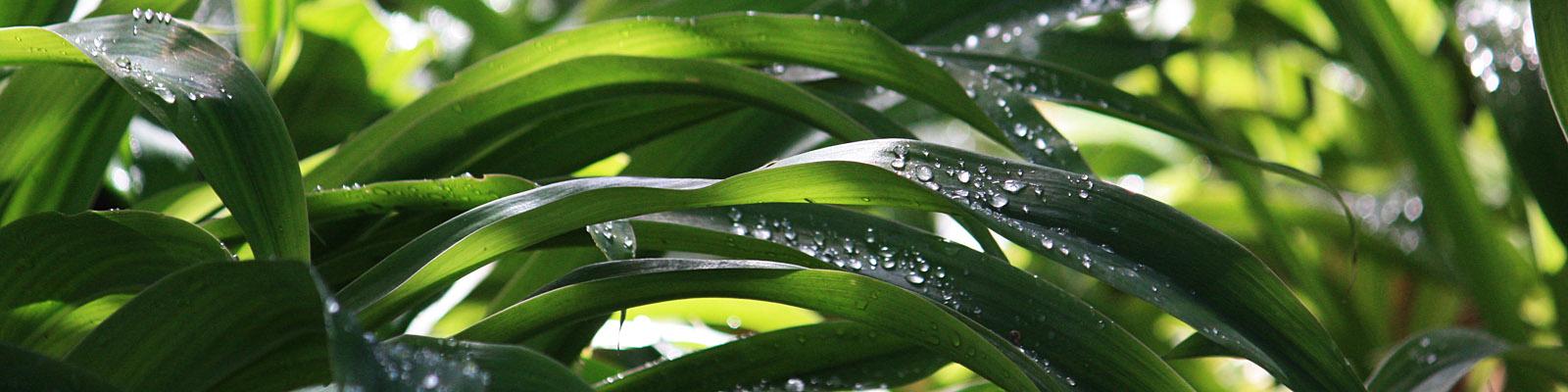 Green Parrot Gardens | Automatic Irrigation| Drip Irrigation