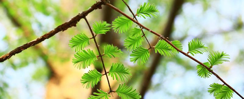 Green Parrot Gardens | Winter Care and Next Season | Robin