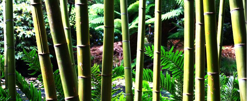 Green Parrot Gardens | Your Garden Style | Bamboo